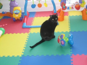Zoey loves the playroom!!  She wishes it was only her room!