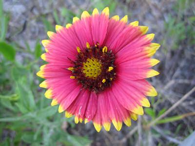 flowersmall_3